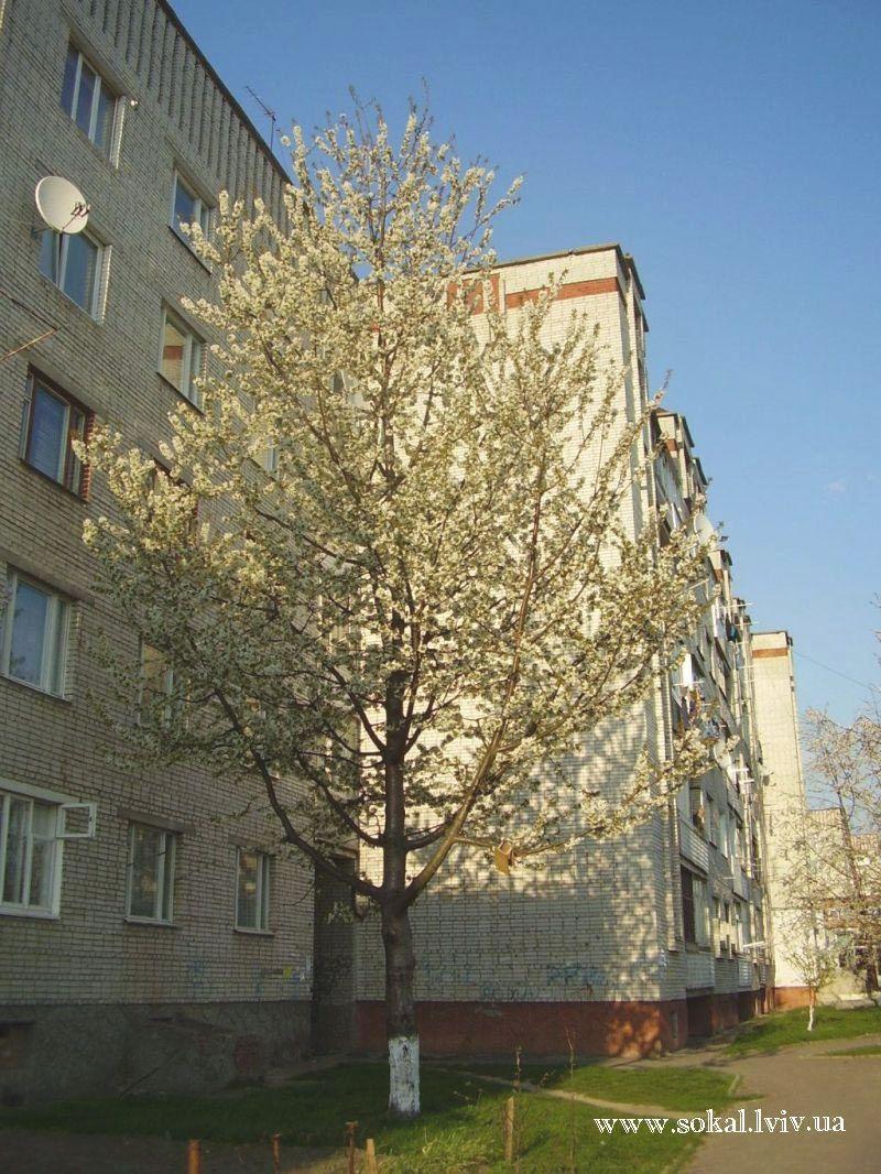 м.Сокаль, вул. Героїв УПА, 53